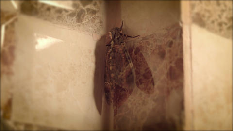 Big butterfly in the bathroom Live Action