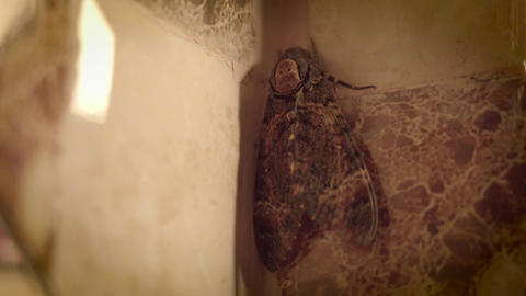 Big butterfly in the bathroom Stock Video Footage