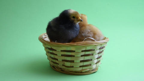2 easter chicks in easter nest with green background Stock Video Footage