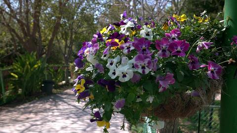 U Flowers 02 Footage