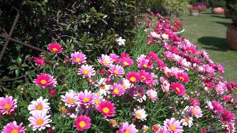 U Flowers 03 Footage