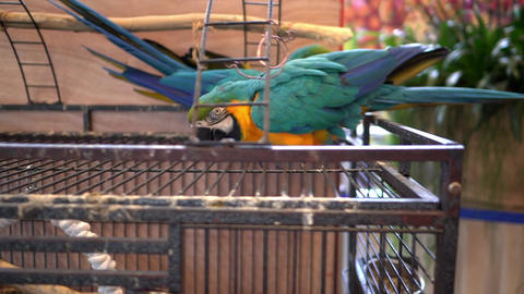 Large Parrots Stock Video Footage
