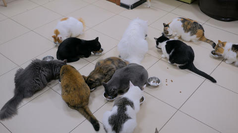 Few cats eating dry pet food together Stock Video Footage