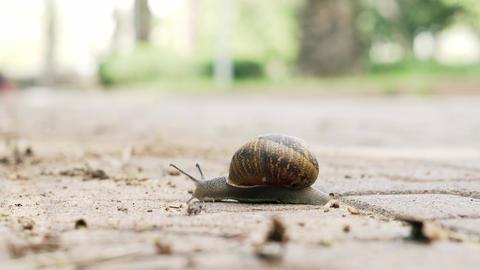 Snail Live Action