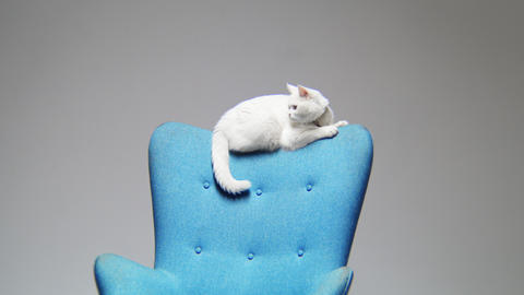 motion to cute cat lying on chair backrest in light room GIF