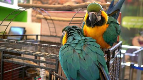 U Parrot 02 Footage