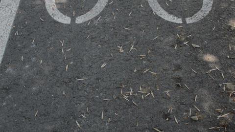 Marked Bicycle Path, Bicycle Sign On The Biking Street Lane Footage