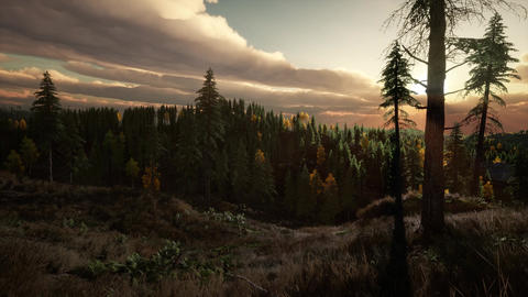 Sunlight in Forest at Sunset Footage
