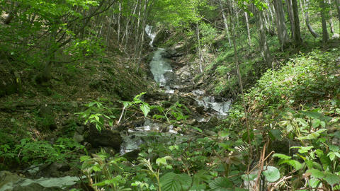 Carpathian Forest Waterfall GIF