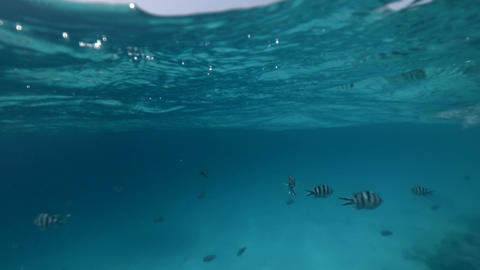 Black and white fish under water close to surface Footage