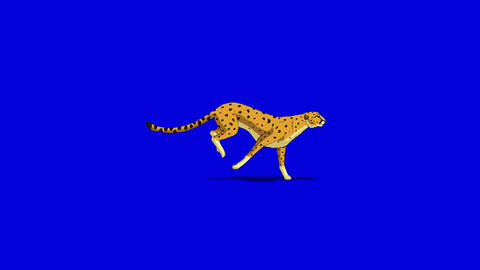 Running Cheetah. Classic Disney Style UHD Animation on Chroma Key Blue Screen Footage