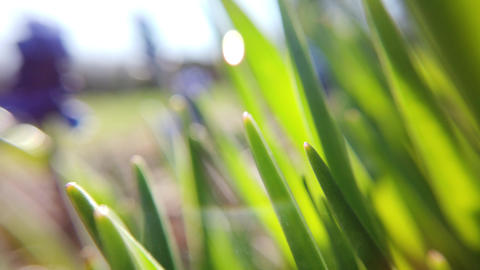 Fresh grass close up on sun rays Stock Video Footage