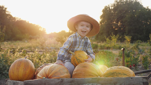 Smiling little farmer with pumpkins Footage