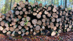 Forest felling, pile of logs Footage