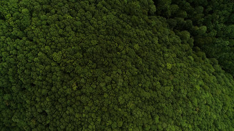 Forest drone shot top down camera moving flying forward tree tops green 1 of 2 Live Action