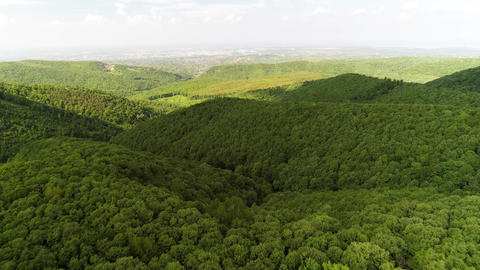 Forest drone shot city in the distance camera moving flying forward Live Action