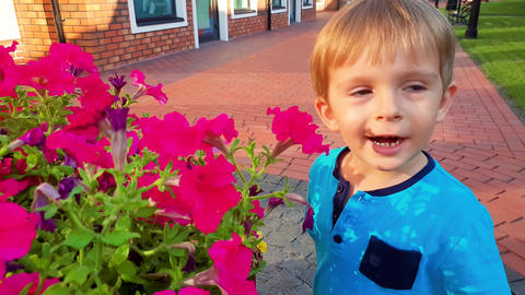 4k video of little toddler boy smelling beautiful pink flowers growing in big Footage