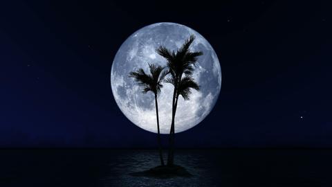 [alt video] Palm Trees on Big Moon Background