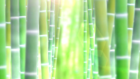 Bamboo forest, zoom in Animation