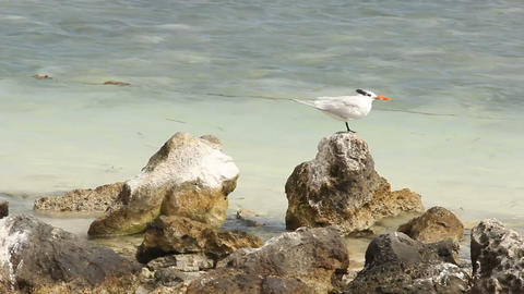 Seagull on a tropical shoreline Footage