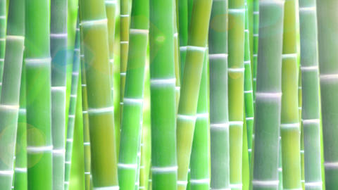 Bamboo forest, upward Animation