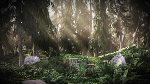 Cg Dawn in the forest Animation