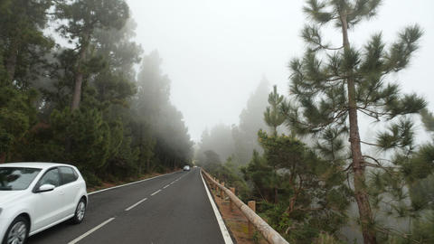 POV driving through a pine forest in mountains. Point of view driving, view from Live Action