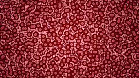 Mov07_bacteria_loop 1