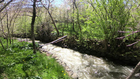 Crossing trees filled with spring bloom and river Footage