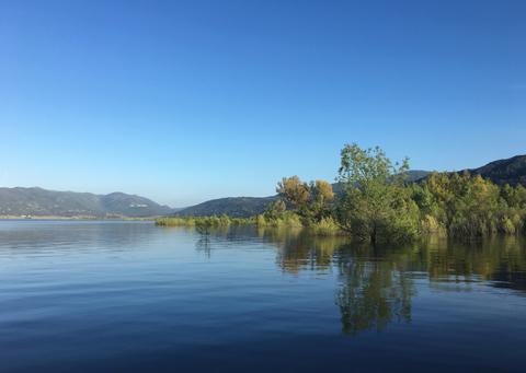 Trees in a Lake Fotografía
