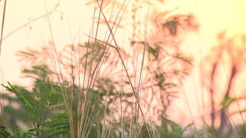 Sun rise Animation