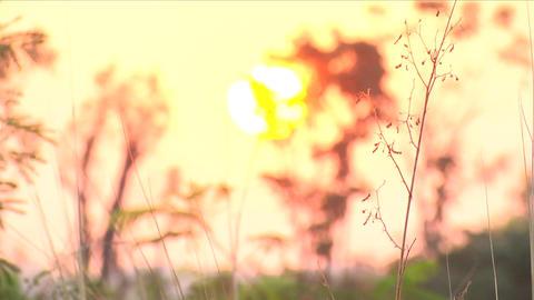 [alt video] Sun rise