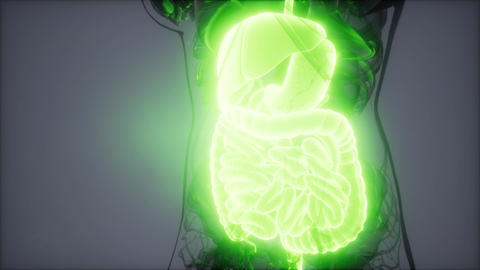 3d illustration of human digestive system parts and functions Archivo