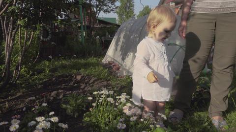 Little girl picks daises on the garden Live Action