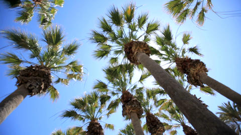 Palm branchePalm branches in sun. Rest on a sunny island among palms. The GIF