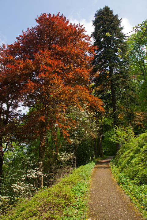 Colourful trees in the forest Photo