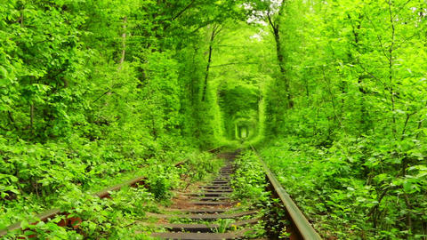 Old Railway Track in the Green Tunnel Footage