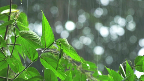 Heavy Tropical Rain on Green Leaves 4k, Live Action