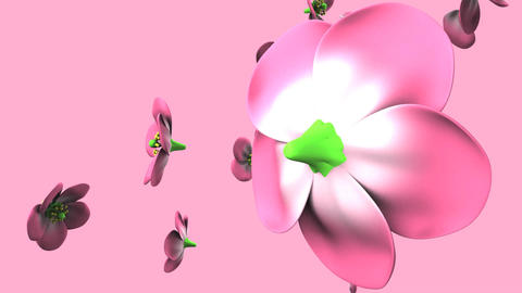 Pink flowers on pink background Animation