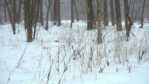 Beautiful winter forest, falling snow Archivo
