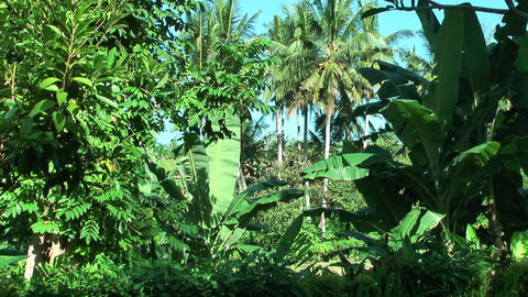 Tropische Vegetation Bali - Naturaufnahme mit Stativ Footage