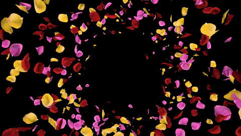 Flying Romantic vibrant colorful Rose Flower Petals…, Stock Animation
