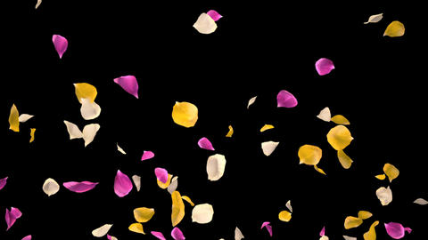 Flying Romantic vibrant colorful Rose Flower Petals... Stock Video Footage