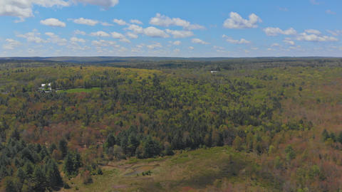 Panoramic view of beautiful landscape in the fresh green forest and a sunny day Footage