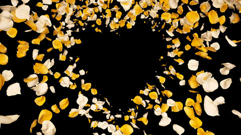 Flying Romantic yellow White Rose Flower Petals heart Alpha isolated Loop Animation