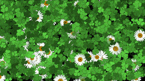 clover & white daisy Animation