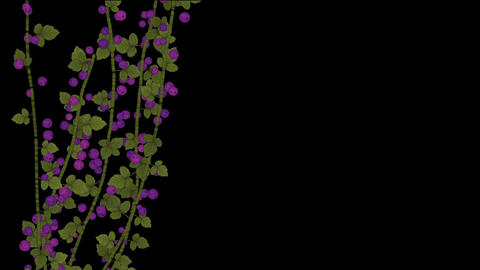growing berries & leaves Animation