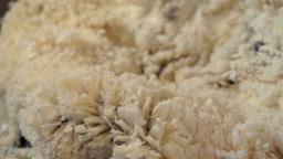 Shearer Shearing a Sheep on an Australian Farm Stock Video Footage