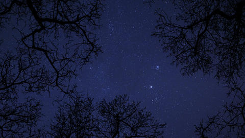 4k UHD night sky stars between trees time lapse 10863 Footage