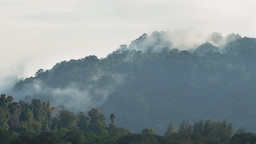Mist Fog Over Tropical Mountains Live Action